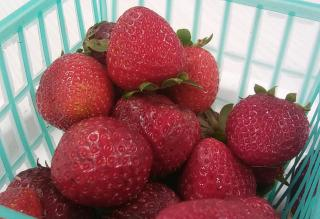 Strawberries from the Farmer's Market